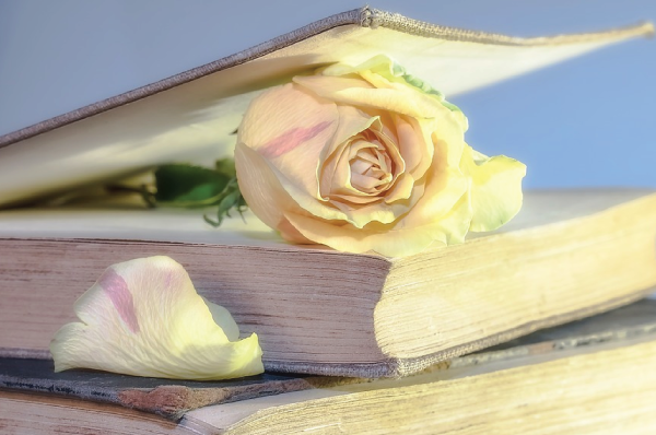 pink rose in a book