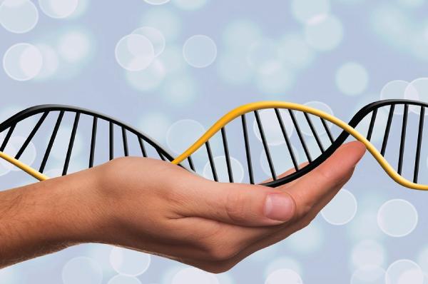 hand holding DNA strand model